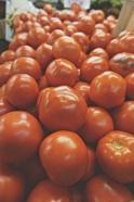 Florida Tomatoes