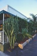 Entrance Plants